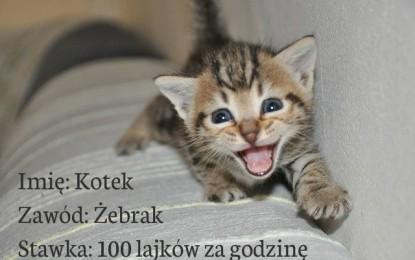 Kotek wyżebrze mniej niż dotychczas – grozi Facebook