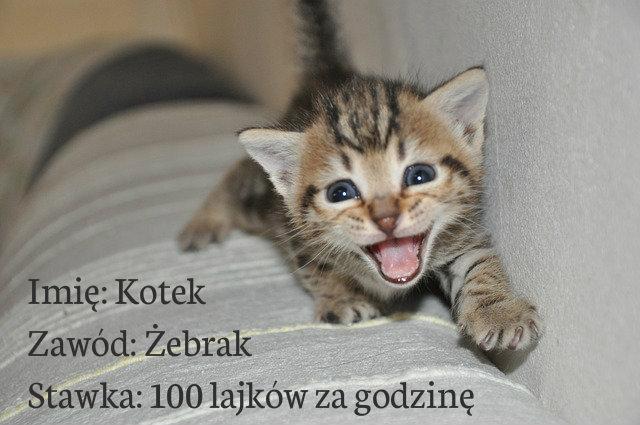 kotek2